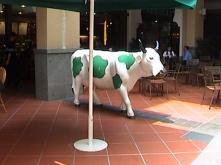 Shamrock Cow?