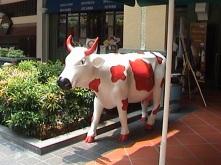Strawberry Milk Cow